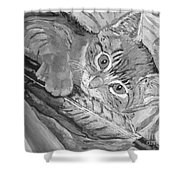 Tabby Kitten Shower Curtain