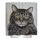 Tabby-lil' Bit Shower Curtain by Megan Cohen