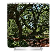 Table Under The Oak Tree Shower Curtain