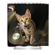Tabletop Dom Shower Curtain