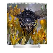 Tachinid Fly Shower Curtain