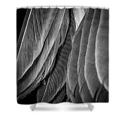 Tail Feathers Abstract Shower Curtain