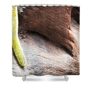 Tail Of The Cactus Shower Curtain