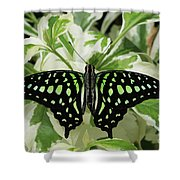 Tailed Jay Butterfly #2 Shower Curtain