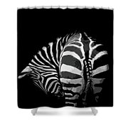 Take A Bow Shower Curtain