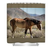 Take  A Walk On The Wildside  Shower Curtain