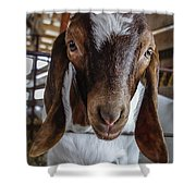 Take Me Home Shower Curtain