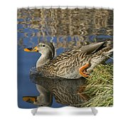 Take The Plunge Shower Curtain