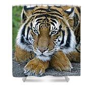 Takin A Break Tiger Shower Curtain