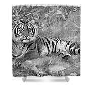 Takin It Easy Tiger Black And White Shower Curtain