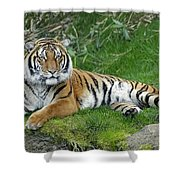 Takin It Easy Tiger Shower Curtain