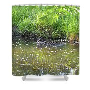 Taking A Stroll With Mom Troughs Floral Reflections Shower Curtain