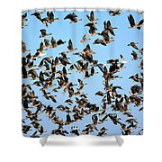 Taking Flight 2 Shower Curtain