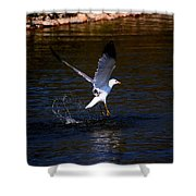 Taking Flight Shower Curtain by Amanda Struz