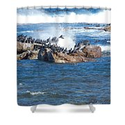 taking flight Capetown Shower Curtain