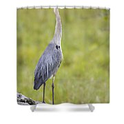 Taking In The Scenery Shower Curtain