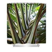 Talipot Palm Shower Curtain