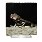 Talking Lizard Shower Curtain