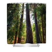 Tall And Mighty Shower Curtain