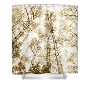 Tall Aspens Shower Curtain