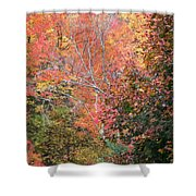 Tall Colors Shower Curtain
