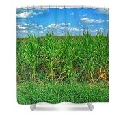 Tall Corn Shower Curtain
