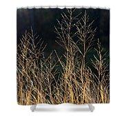 Tall Fall Grasses Shower Curtain
