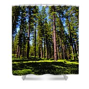 Tall Forest Shower Curtain