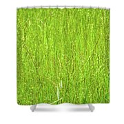 Tall Grassy Meadow Shower Curtain