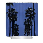 Tall Palm Trees In A Row Shower Curtain