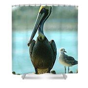 Tall Pelican Shower Curtain