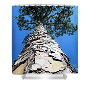 Tall Pine Tree In Summer Shower Curtain