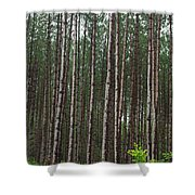 Tall Pines After The Rain Shower Curtain