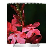 Tall Red Star Shower Curtain