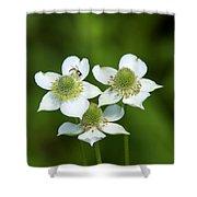 Tall Thimbleweed Dsmf0228 Shower Curtain