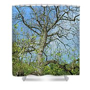 Tall Tree Shower Curtain