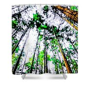 Tall Trees To The Sky Shower Curtain