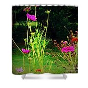 Tall Wispy Flowers In Pink Shower Curtain