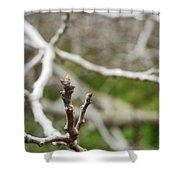 Talon Branch Shower Curtain