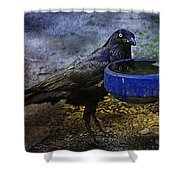 Taming Of The Crow Shower Curtain