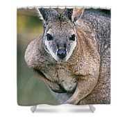 Tamma Wallaby Shower Curtain