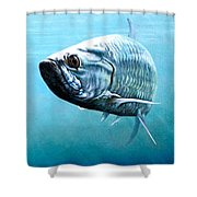 Tampa Bay Tarpon Shower Curtain