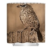 Tanager Finch Shower Curtain