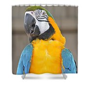 Tanganyika 0087 Shower Curtain