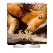 Tangled Foals Shower Curtain