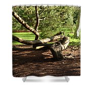 Tangled  Tree Shower Curtain