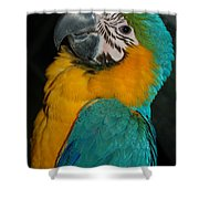 Tango, The Blue And Gold Macaw Shower Curtain