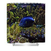 Tanked 6 Shower Curtain