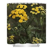 Tansy Blossoms Shower Curtain