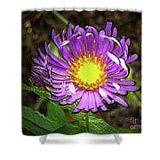 Tansyleaf Aster Shower Curtain